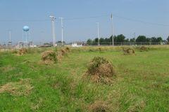 2010 Wheat Binding & Shocking